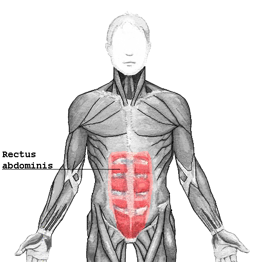 Rectus Abdominis Muscle (Abs Anatomy)